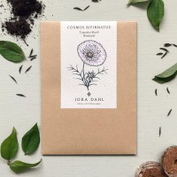 Jora Dahl Kosmee Cupcake Blush (Cosmos bipinnatus) Saatgut
