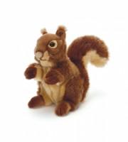Squirrel weiches Eichhörnchen