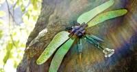 Totem Wasserjungfer Libelle